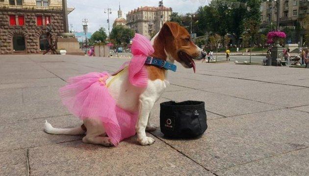 Un défilé de Jack Russell Terrier a eu lieu à Kyiv (photos)