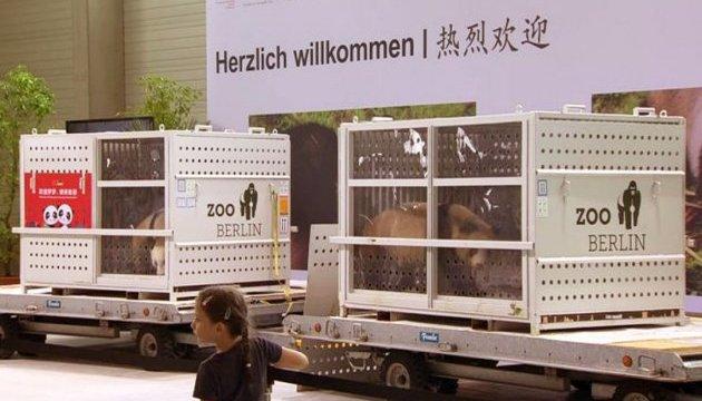Нові панди в Берлінському зоопарку чекають на Ангелу Меркель та Сі Цзіньпіна