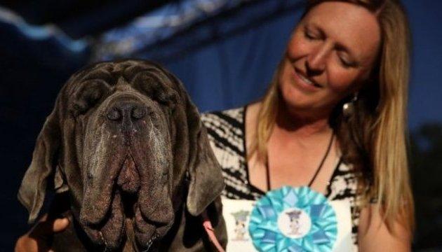 У Каліфорнії обрали найпотворнішу собаку у світі