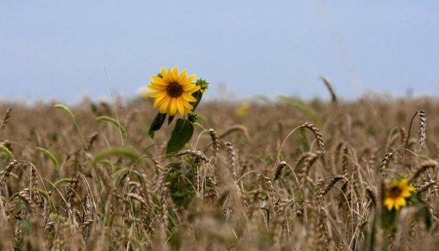 Експерт пояснив, що потрібно зробити Україні для розвитку експорту насіння