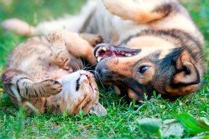 У китайському Шеньчжені офіційно заборонили їсти котів і собак