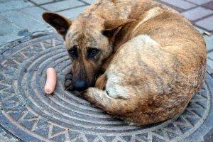 Сьогодні — Всесвітній день безпритульних тварин