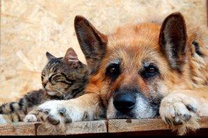В Киеве откроют Центр гуманного обращения с животными