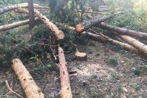 Держлісагентство запускає інтерактивну карту лісових рубок