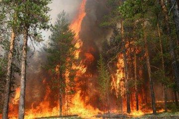State Emergency Service warns Ukrainians of fire hazard in six regions