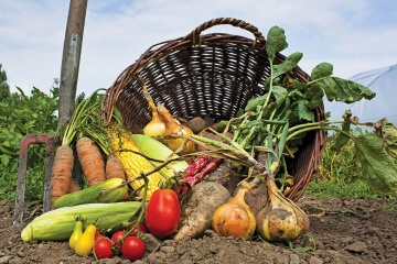 Ukraine remains among top five agricultural exporters to EU