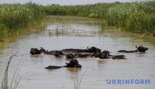 Новий екопарк на Одещині дивуватиме водяними буйволами