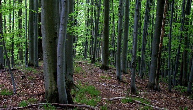 State Forest Agency intends to improve normative acts on forest management