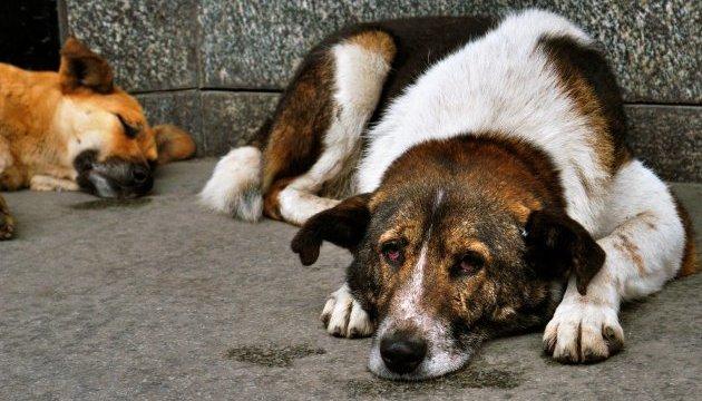 В Николаеве люди требуют не возвращать бездомных собак во дворы после стерилизации