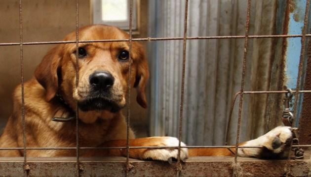 « Non » à l'euthanasie: les défenseurs des animaux manifestent devant la mairie de Mykolaiv