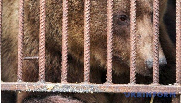 В Мукачевому заборонили виступи пересувних цирків з тваринами