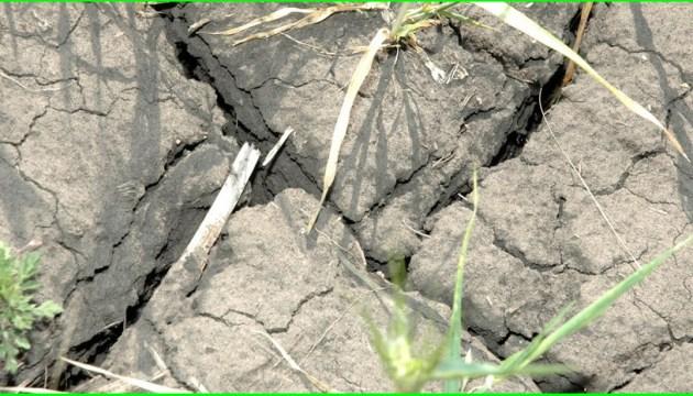 Посуха на Харківщині побила 170-річний рекорд