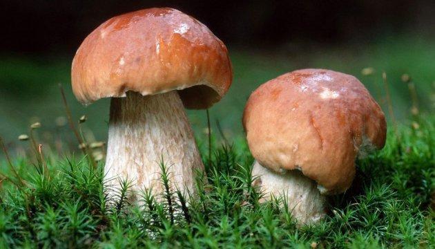 По гриби – всією файтою