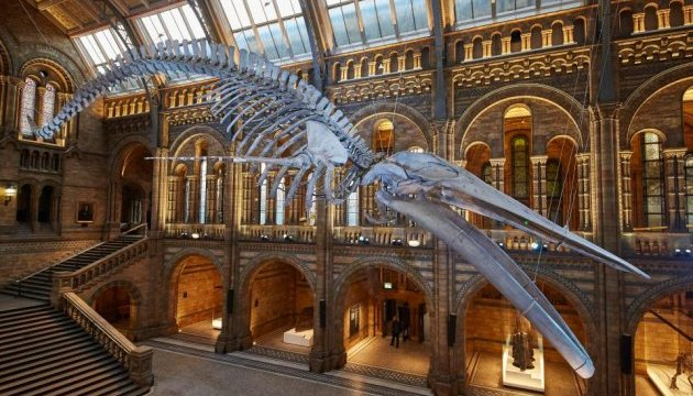 У Лондоні можна побачити синього кита на ім'я Надія