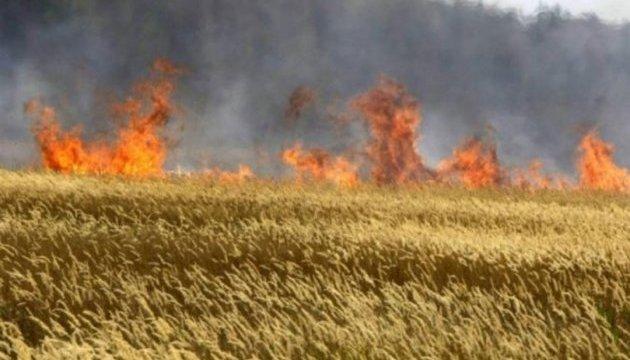 На Донеччині згоріли близько 20 гектарів пшениці