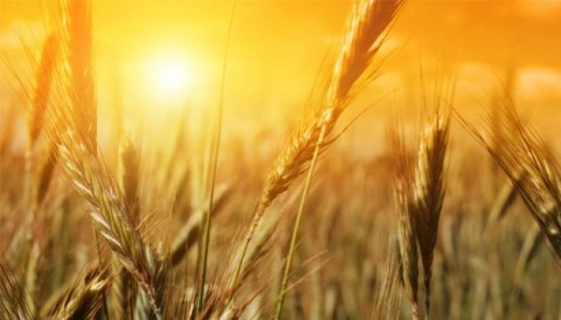 One-third of early grains harvested in Ukraine