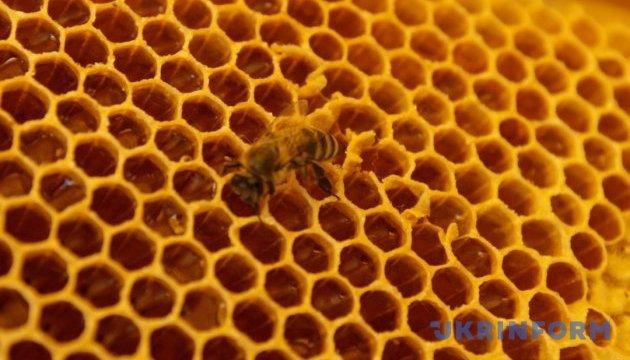 Міжнародний фестиваль меду відбудеться в Івано-Франківську