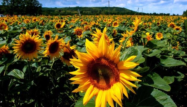 Туреччина стала лідером серед імпортерів українського соняшнику