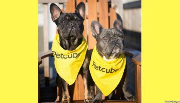 Українська компанія спробує зібрати рекордну кількість врятованих собак в Сан-Франциско