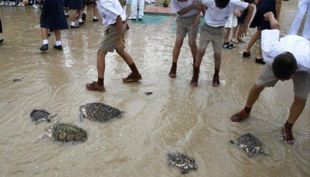 На день рождения короля Таиланда в море выпустили 1066 черепах