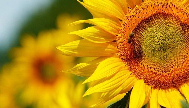 1 серпня: народний календар і астровісник