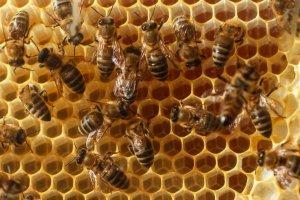 В этом году пчеловоды получат специальную бюджетную дотацию - Минэкономики