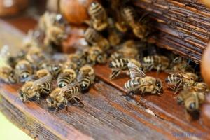 Попит на держдопомогу у бджільництві втричі перевищив очікування – Мінекономіки