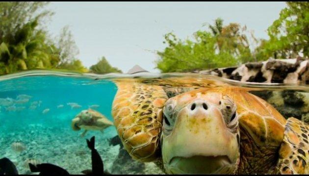Туристов на острове задержали брачные игры черепах