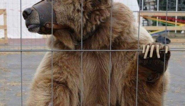 Les écologues ont libéré une ourse vivant dans un cirque mobile