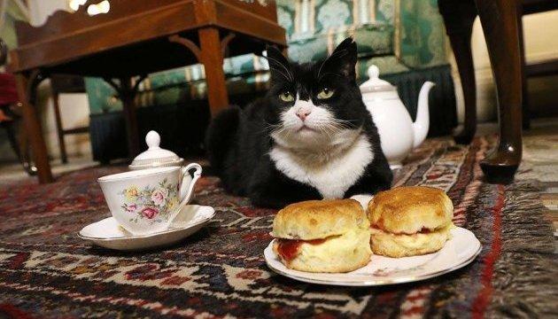 Всесвітній день котів: посольство Британії підрахувало вусатих працівників в уряді