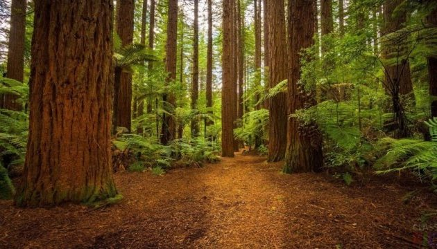 State Forest Resources Agency presents five-year strategy for hunting, forestry economy reform
