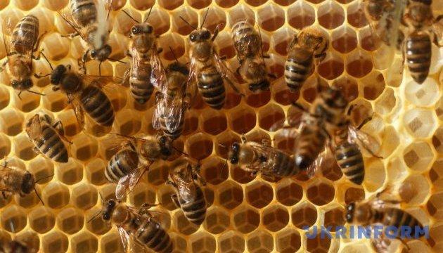 Українських бджолярів запросили до участі у London Honey Awards 2021