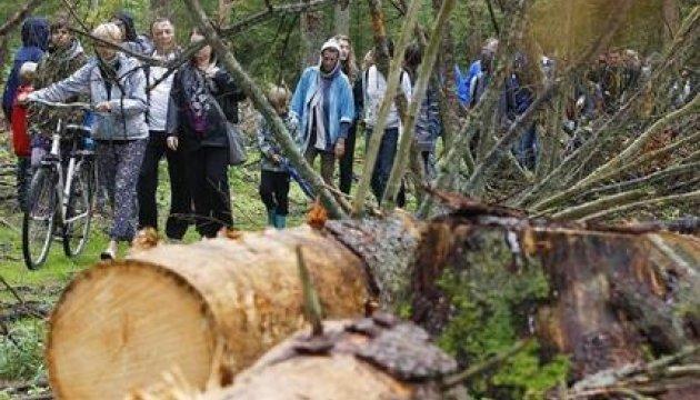 У Польщі протестують проти вирубки Біловезької пущі