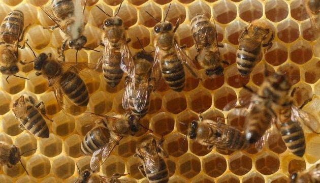 Новий завод на Черкащині: українського меду стане більше на 16 тисяч тонн