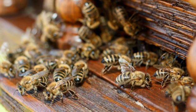 Бджоли захопили Таймс-сквер