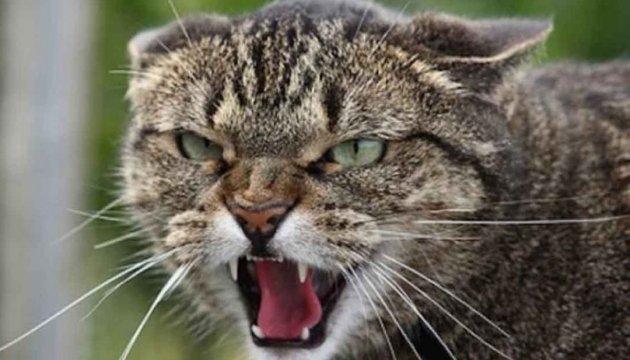 У Кропивницькому скажений кіт покусав дитину і п'ятьох дорослих