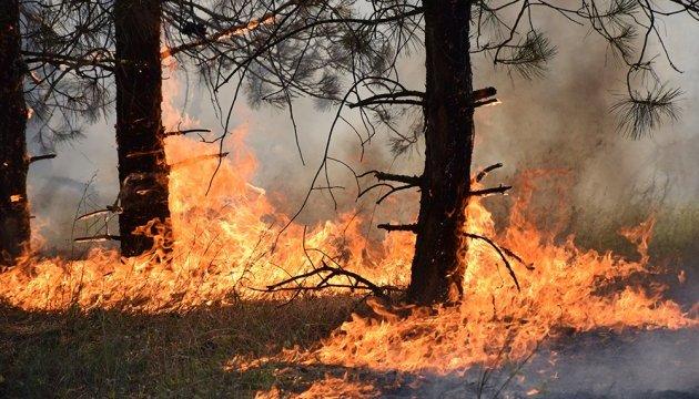 Пожежа на Миколаївщині: поліція затримала паліїв