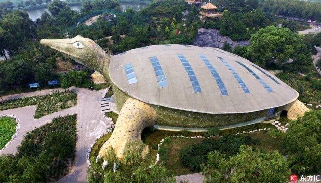 Біля китайського озера з'явилася гігантська черепаха