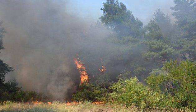 Пожежа на Дніпропетровщині: 90 гектарів лісу випадково спалила дачниця