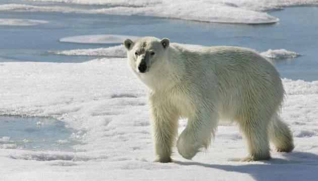 У Норвегії гід сплатить штраф за переляк білого ведмедя
