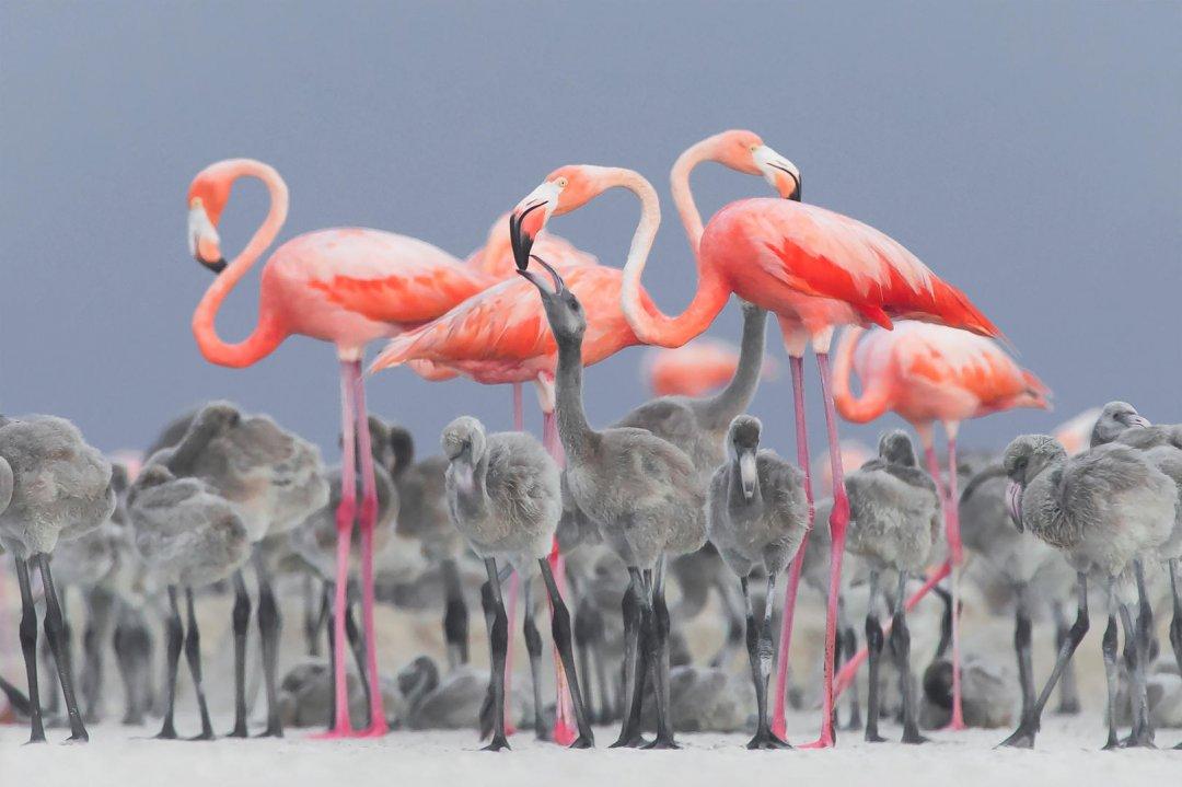 Feeding Flamingos by Alejandro Prieto Rojas