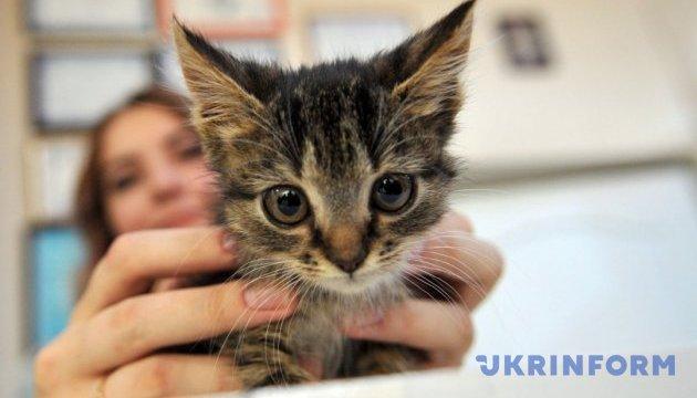 Британським зоомагазинам заборонили продавати цуценят і кошенят