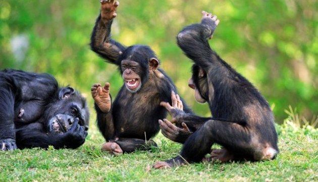 В'єтнам хоче збільшити поставки мавп у Росію