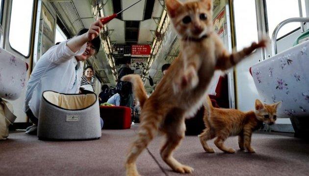 Японці запустили в поїзд безпритульних котів