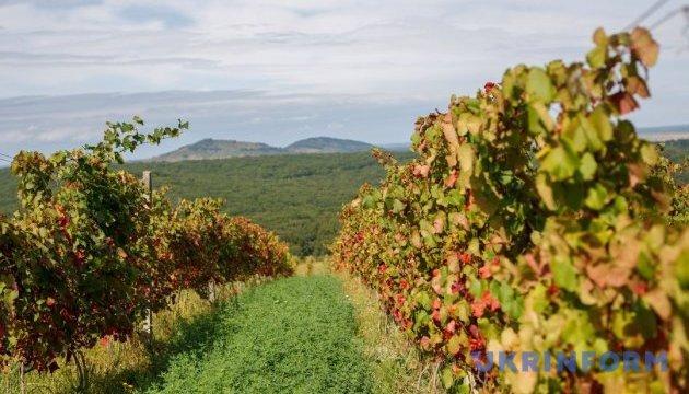 Поддержка садоводов и виноградарей в этом году вырастет почти втрое