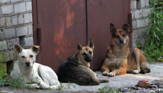 Николаевские депутаты приняли программу о бездомных животных