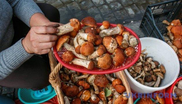 """Українців попереджають про """"підступність"""" грибів"""