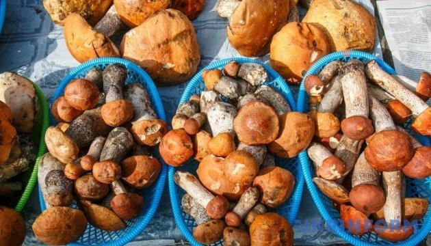 Медики закликають вживати гриби відповідально: у Києві шестеро осіб в реанімації