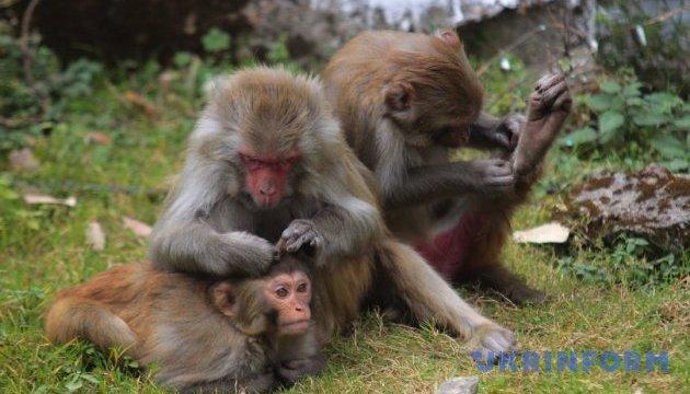 Китайские ученые первыми в мире удачно клонировали обезьян