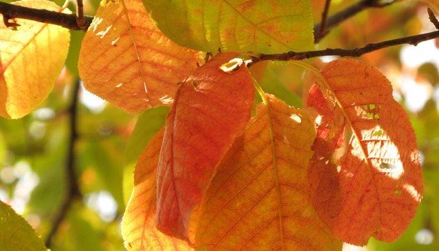 5 жовтня: народний календар і астровісник